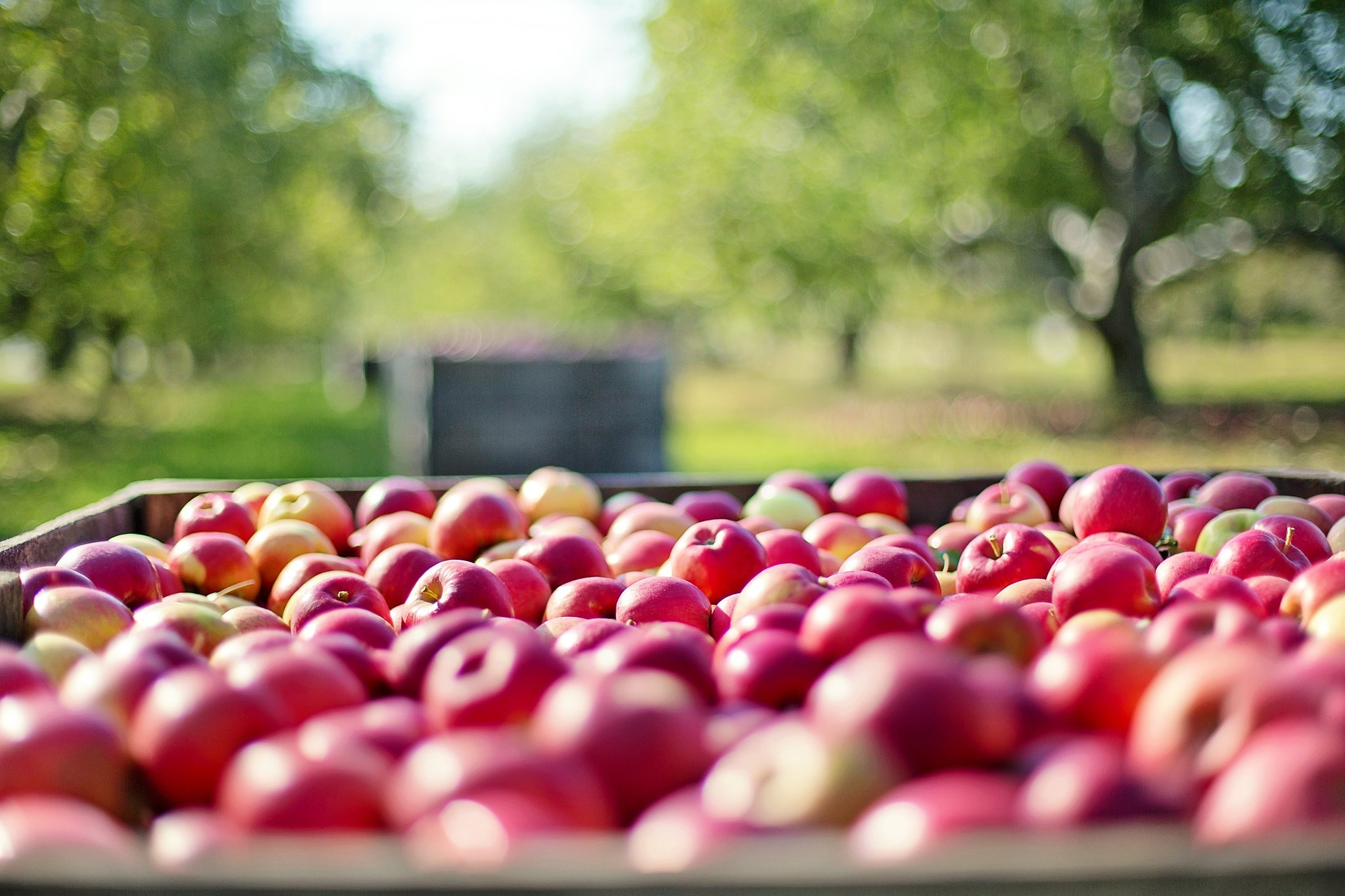 Rosh Hashanah in the Orchard