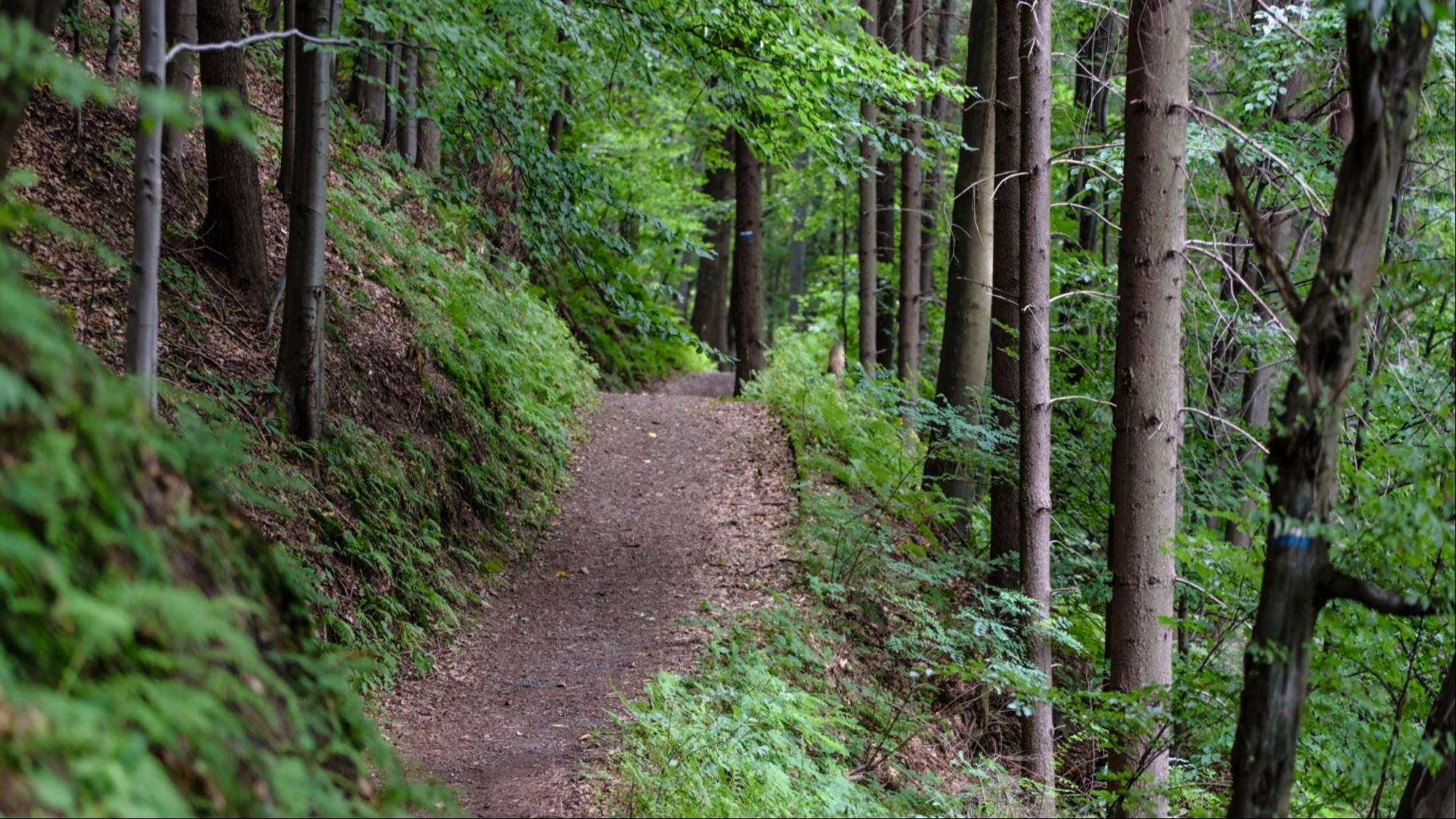 Shavuot Hike